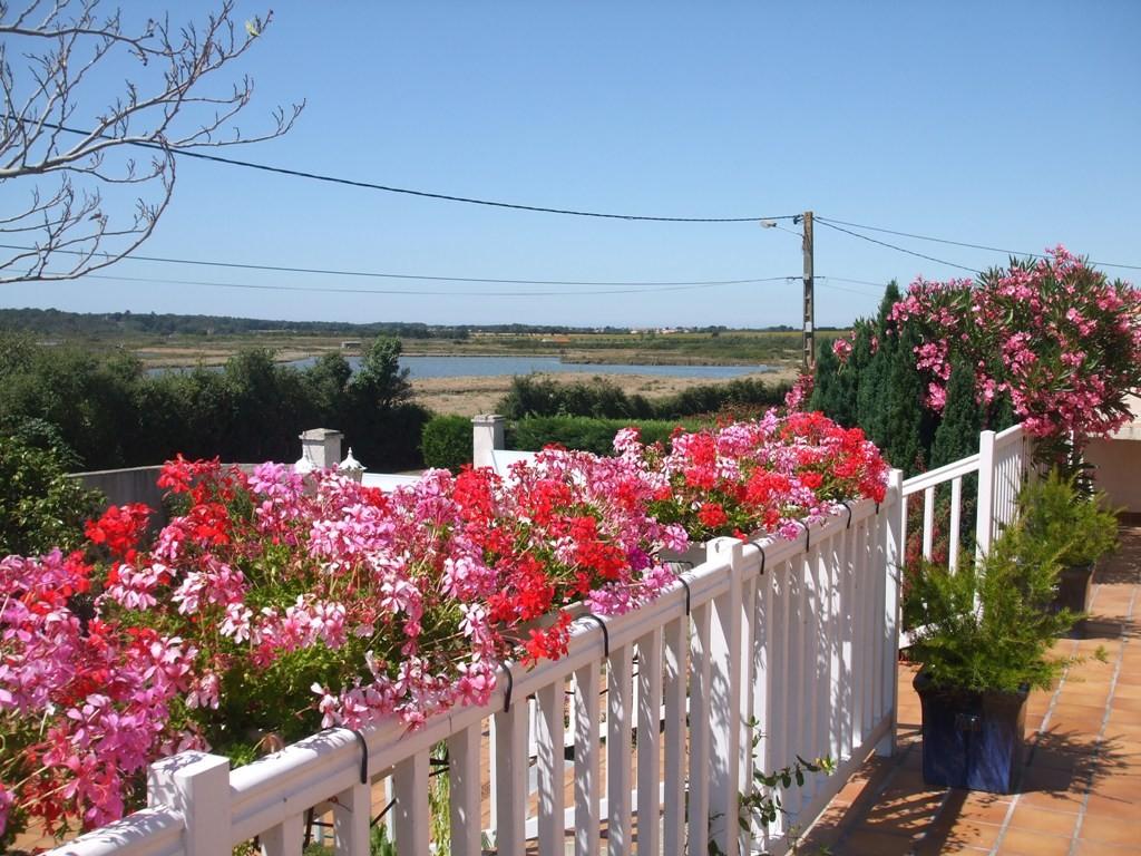 vue de ma terrasse